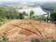 Thêm cánh đồng hoa 3 ha vừa xuống giống ở miền Tây Nghệ An