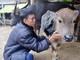 Lạnh kéo dài, nông dân khoác áo chống rét cho trâu, bò