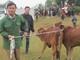 Trao 199 con bò giống sinh sản cho hộ nghèo ở Nghĩa Đàn