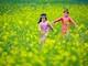Rực sắc vàng ở cánh đồng hoa cải ven sông Lam