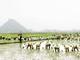 """Hàng trăm người dân xóm Rộc """"đổ đồng"""" cấy lúa giúp gia đình hoàn cảnh éo le"""