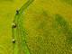 Cánh đồng lúa đẹp như tranh vẽ ở Quỳ Châu