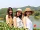 Hàng ngàn du khách đến đảo chè Nghệ An trong nắng nóng