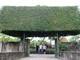 Độc đáo cổng nhà làm từ 2 cây duối cổ thụ ở Nghệ An