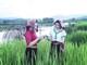 Trên đồng lúa Quỳ Châu