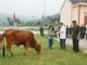 Tặng bò cho hộ nghèo ở Yên Thành