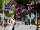 Tháng 5 xao xuyến những sắc hoa học trò trên phố Vinh