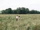 'Dân săn ảnh' ở Nghệ An 'nóng ruột' với đồng cỏ tại chân đê Hưng Hòa