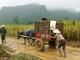 Người dân dầm mưa thu hoạch ngô chạy lũ