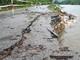 Nhiều tuyến Quốc lộ ở miền núi Nghệ An hư hỏng nặng