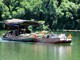 Nhộn nhịp mùa lùng trên lòng hồ Thủy điện Hủa Na