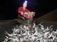 Người dân làm vó đèn khổng lồ, đánh nửa tấn cá mương mỗi mẻ