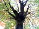 Thành Vinh rực vàng mùa lộc vừng thay lá