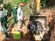 Khó kiểm soát dịch tả lợn châu Phi ở Kỳ Sơn vì thói quen nuôi lợn thả rông