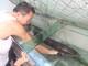 Ngư dân bắt được cá chình loại lớn, hiếm gặp trên sông Lam