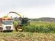 Thu hoạch cánh đồng hoa hướng dương, du khách tiếc nuối