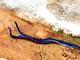 Nghệ An: Người dân bắt gặp đôi rắn hổ phì đang quấn nhau bên đường