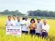 Giống lúa Sông Lam 9 đạt năng suất trên 60 tạ/ha trong vụ hè thu 2019