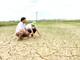 Nắng nóng và xâm nhập mặn 'uy hiếp' 700 ha lúa hè thu ở Nghi Lộc
