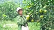 Đề xuất bổ sung điểm chỉ dẫn cam Vinh cho cam Bãi Phủ