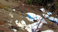Nghệ An: Hàng chục bao tải gà chết vứt la liệt ven biển