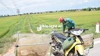 Chạy xe máy khắp đồng săn 'tôm bay' thu tiền triệu mỗi ngày