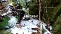 Tuyết rơi trong rừng Mường Ải (Kỳ Sơn)