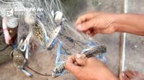 Đánh lưới ghẹ gần bờ, ngư dân Nghệ An thu tiền triệu mỗi ngày