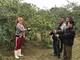 Nông dân Nghệ An thu hàng trăm triệu mỗi năm từ giống táo Thái Lan