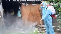 Xử lý nghiêm tổ chức, cá nhân vi phạm trong phòng chống dịch tả lợn châu Phi