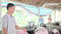 Nông dân Nghệ An làm giàu từ nuôi lợn Mỹ