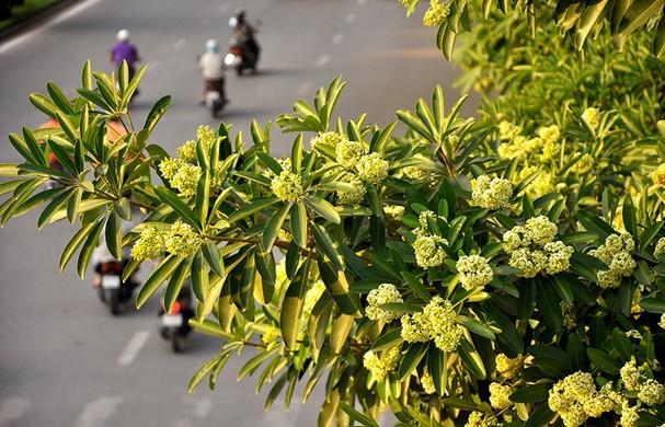 Quyến rũ những loài hoa gợi sắc thu - ảnh 3