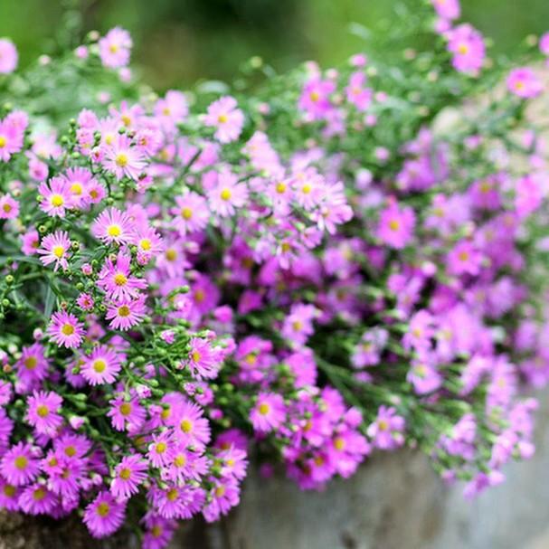 Quyến rũ những loài hoa gợi sắc thu - ảnh 6