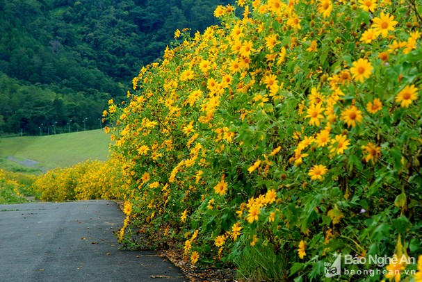 Quyến rũ những loài hoa gợi sắc thu - ảnh 5