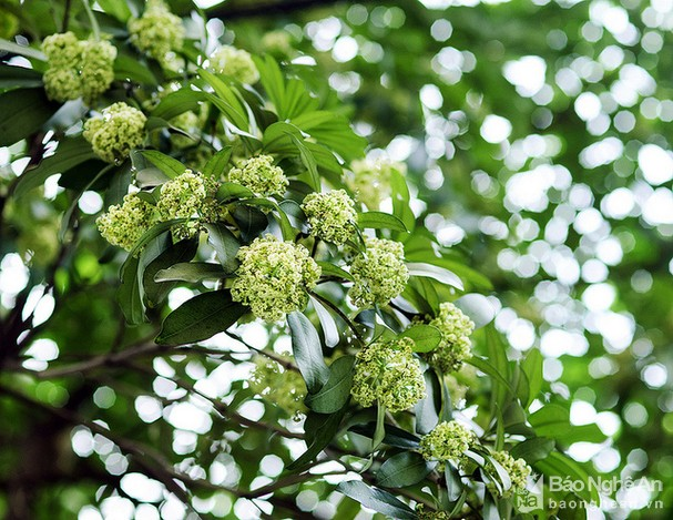 Quyến rũ những loài hoa gợi sắc thu - ảnh 2