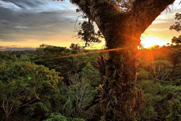Những khu rừng đẹp nhất thế giới - ảnh 2