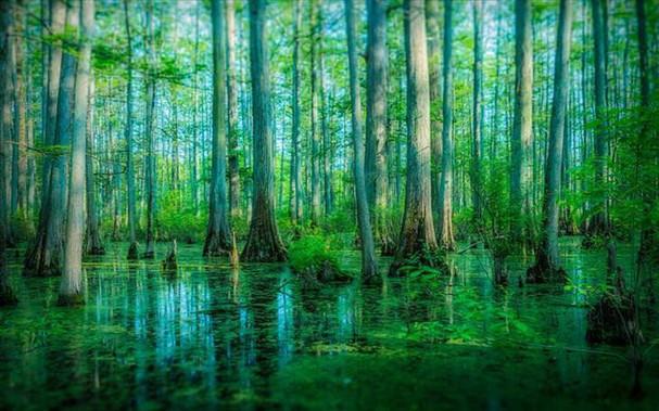 Những khu rừng đẹp nhất thế giới - ảnh 3