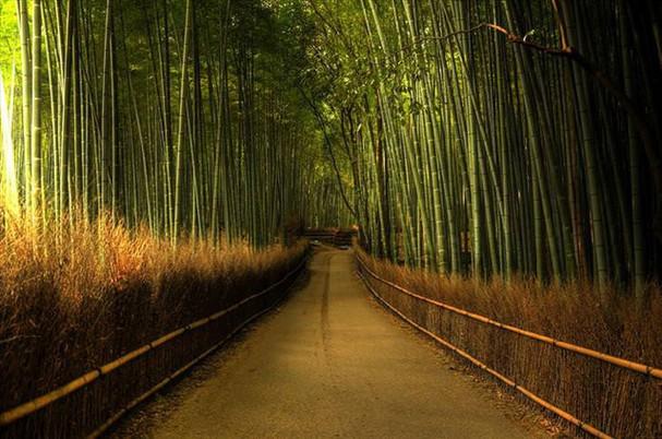 Những khu rừng đẹp nhất thế giới - ảnh 4