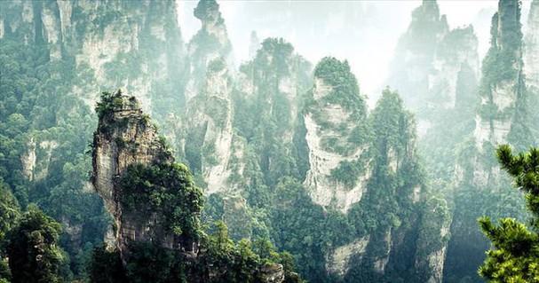Những khu rừng đẹp nhất thế giới - ảnh 5