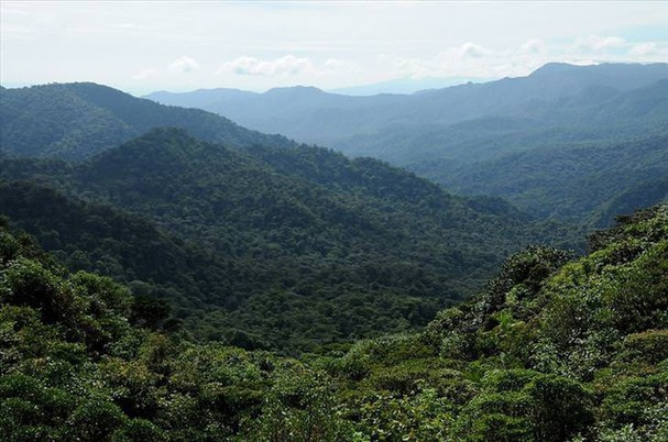 Những khu rừng đẹp nhất thế giới - ảnh 6