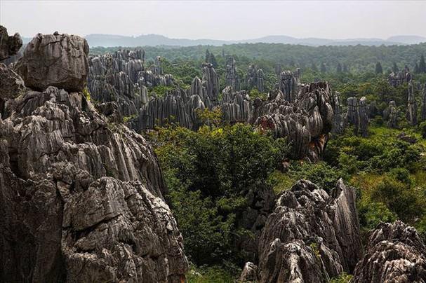 Những khu rừng đẹp nhất thế giới - ảnh 8